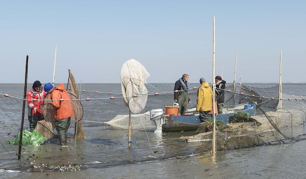 Vissers van de kust aan het werk met visstand onderzoek bij de onderzoek fuik